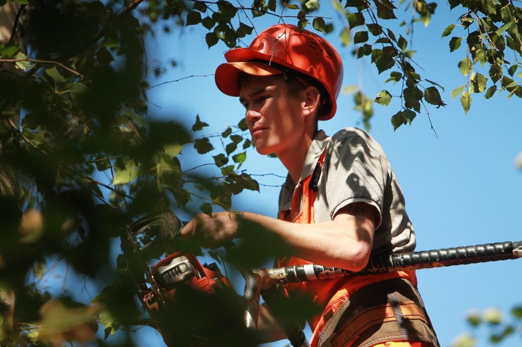"Сотрудники ""Жилищника"" приведут в порядок деревья в Таганском районе. Фото: Наталия Нечаева, ""Вечерняя Москва"""